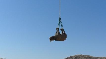 """Премию за """"подвешивание носорогов"""" выдали в сфере транспорта."""