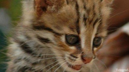Иван Охлобыстин продает котят через Интернет