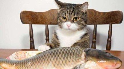 Красивое: лучшие приколы и мемы с котами, покупающими рыбов