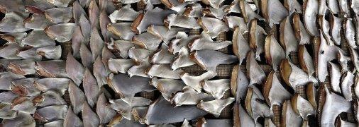Плавники акул